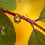 Water Drop Refractions 12